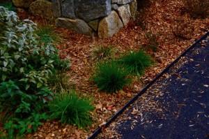 leaf mulch_#2